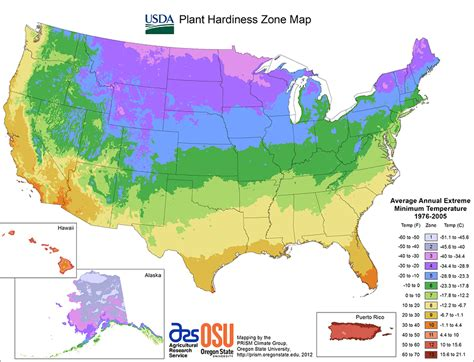 gardening zone 10 growing care usda hardiness zone map usda