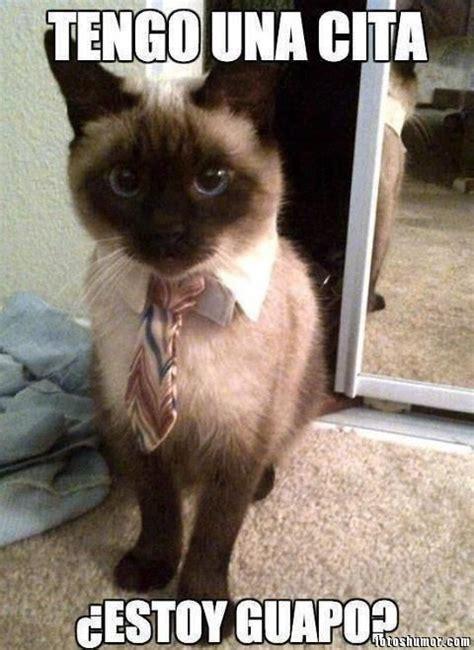 imagenes graciosas con memes memes de gatos imagenes chistosas
