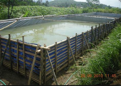 Pakan Ikan Lele Tradisional pengertian budidaya ikan secara lengkap