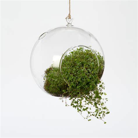 hanging bubble terrarium terrain