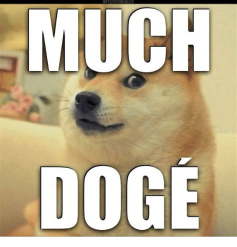 Much Dog Meme - much dog dogs meme on sizzle