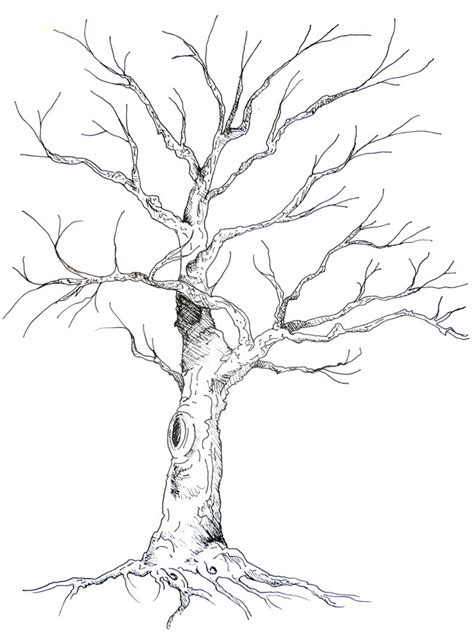 A Sketches Of Trees by Tree Drawings In Pencil Search Results Calendar 2015