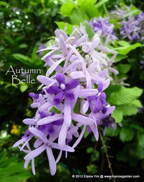 photos of colombia flowers petrea volubilis 27 best petrea volubilis images on pinterest morning