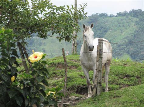 imagenes de paisajes y caballos paisajes con caballos corriendo imagui