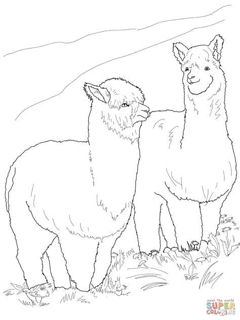 how to draw alpaca