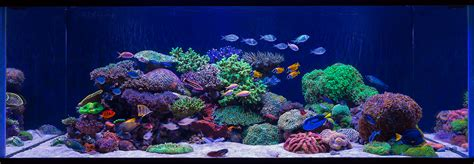 Aquascapes Com Aquarium Design Group