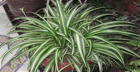 ask wet forget indoor plants that are absurdly easy to
