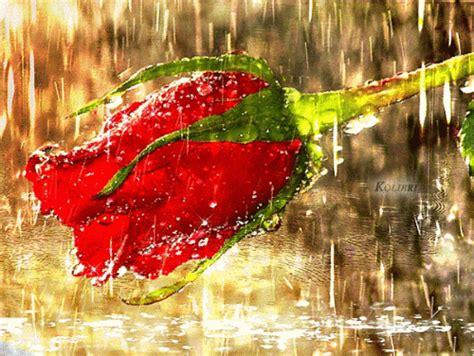 bonitas imagenes gif de flores y lluvia hermosas flores gifs bajo la lluvia te invito a verlas