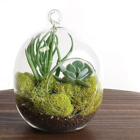 Vase Terrarium zen hanging glass terrarium vase
