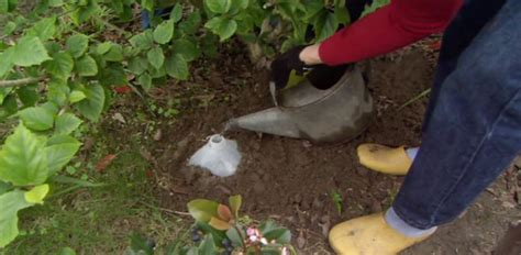 Best Way To Water A Vegetable Garden Diy Drip Watering System For Your Garden Today S