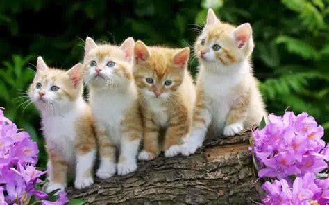 wallpaper bergerak kucing gambar dan meme lucu gambar kucing lucu galau