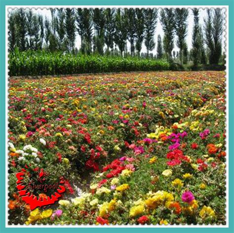 wildflower container garden compare prices on wildflower mix seeds shopping