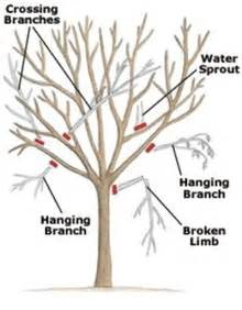 when to prune trees iseeidoimake