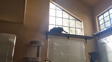Window Cat Shelf by Pinstrosity Some Time Ago Sunday Cat Shelf Confessions