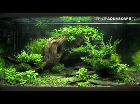 1136 best images about planted aquariums on