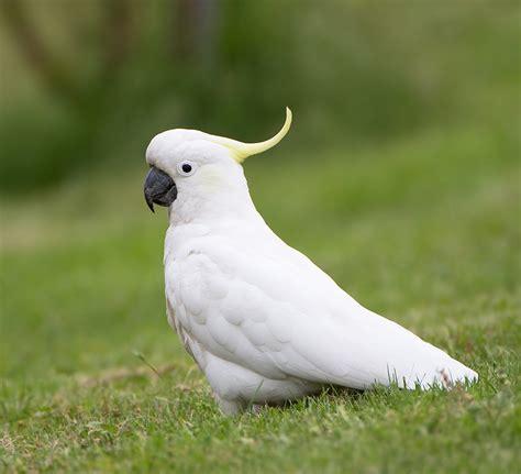 Birds Top by Top 10 Best Pet Birds List Of Beautiful Birds