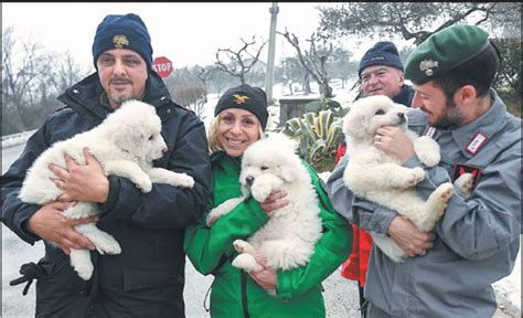 rescuers hold  puppies    alive   rubble   avalanche hit hotel