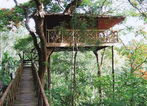 best treehouse the world s best treehouse hotels tree houses tree