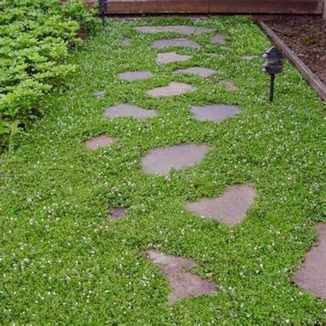 Green Carpet Rupturewort Seeds by Creeping Speedwell Ground Cover Seeds