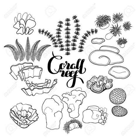 Clipart Of A Sketched Reef by Coral Reef Clipart Sketch Pencil And In Color Coral Reef