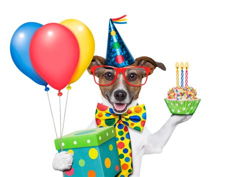 puppy s birthday s birthday present and balloons 4249515 8395x6296 all for desktop