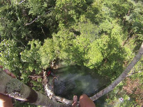 60ft tree jump on the weeki wachee river youtube