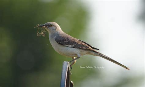 florida state bird other friends neighbors pinterest