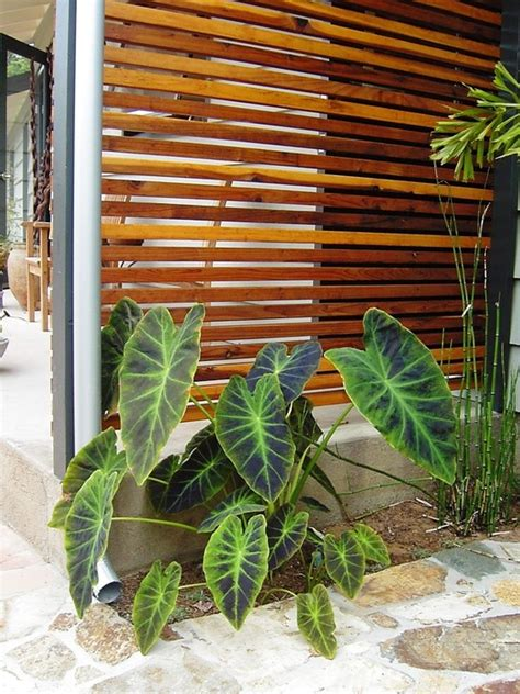 screening ideas for backyards 1000 images about screens on pinterest pathways front