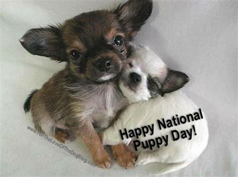 puppy day it s national puppy day so happy puppy day friends for the of the