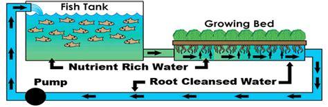 aquaponics diagram aquaponics profit pdf details plans diy