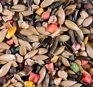 Jual Pakan Burung Jalak budidaya burung jenis biji bijian pakan burung ocehan