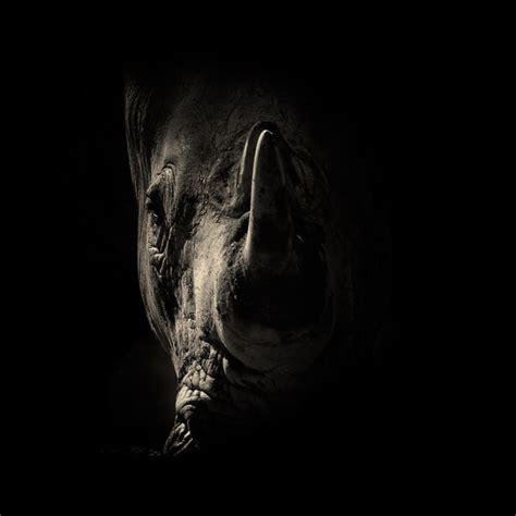 imagenes de animales en blanco y negro tremendas imagenes en blanco y negro de animales taringa