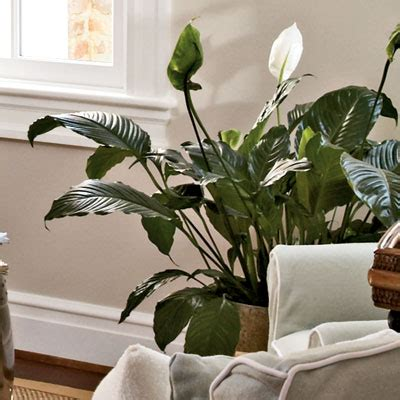 plants for home decor home decor with plants 2017 grasscloth wallpaper