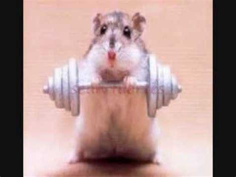 imagenes mas graciosas del mundo animales graciosos 2011 youtube