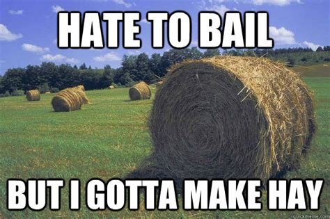 Hay Meme - hate to bail but i gotta make hay bail of hay meme