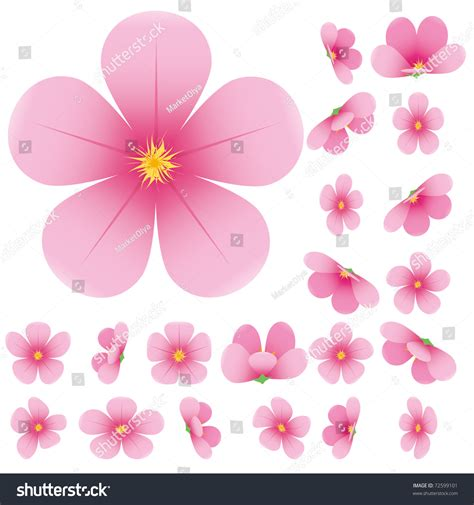 Blossom Collection 2set Free Blossom 1set cherry blossom flowers of set pink flowers collection vector illustration 72599101