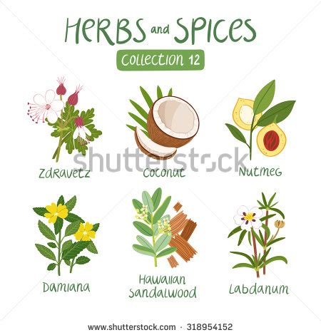 Herbs And Spices 8 Letters