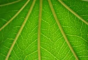 Free Green Green Background Free Stock Photo Public Domain Pictures