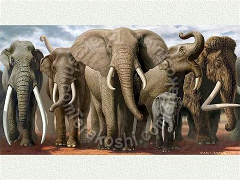 Extinct Mammals Related Keywords Suggestions Extinct Mammals Long | extinct elephant species related keywords suggestions
