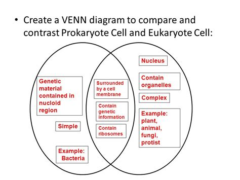 prokaryote and eukaryote venn diagram cell structure review ppt