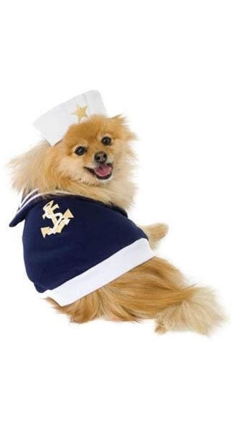 pomeranian costumes 1000 images about pomeranian on chihuahuas teacup pomeranian and white