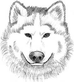realistic wolf coloring pages how to draw quileute tribe sketch template