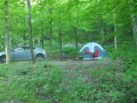 primitive site in the woods picture of mohican