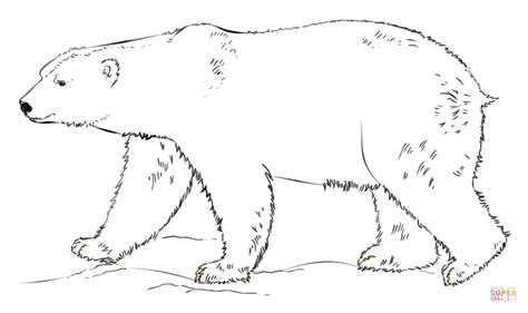 Polar Bear Walking Coloring Page Free Printable Coloring Polar Coloring Pages