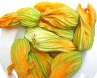fiori di zucchino ripieni zucchina o zucchino alimentipedia enciclopedia degli