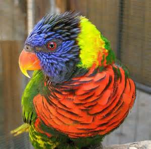 colorful bird pictures colorful birds photo memorie
