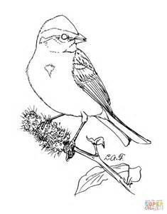 Sparrow Coloring Pages American Tree Sparrow Coloring Page Free Printable by Sparrow Coloring Pages