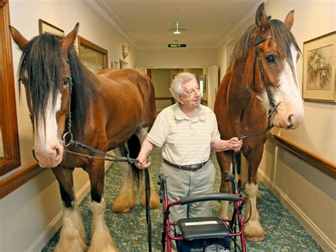 horses visiting a retirement home is