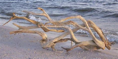 beautiful driftwood wall art  driftwood sculpture  sale