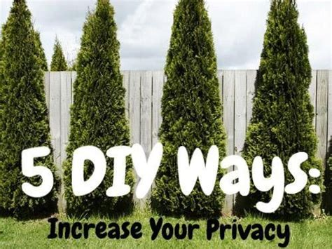 trees for backyard privacy best 25 yard privacy ideas on pinterest backyard privacy backyard landscaping